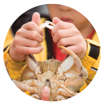 Boy holding crab