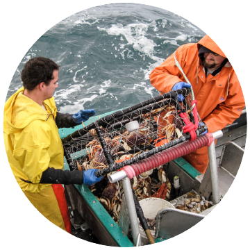 crabbing men
