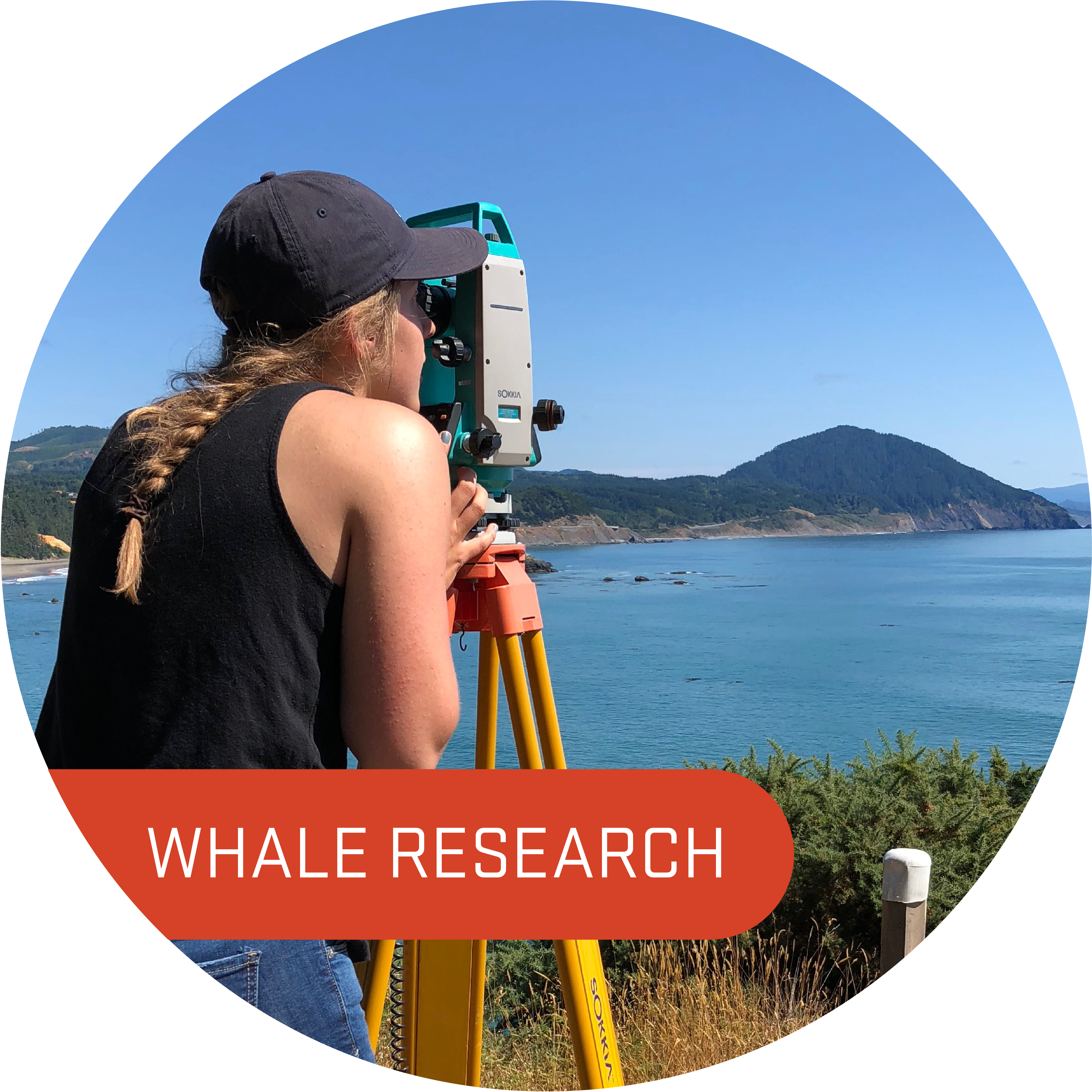 Whale Research Internship